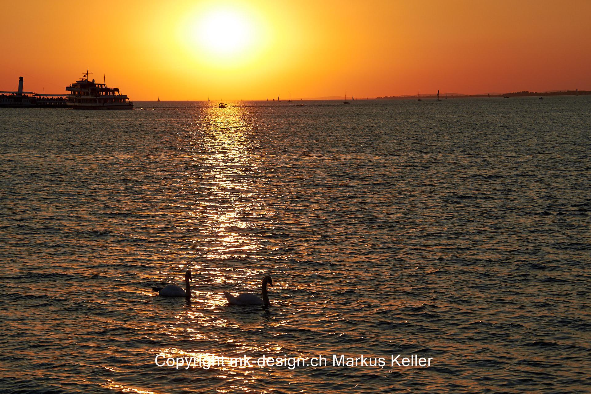 Sonne   Sonnenuntergang   See   Bodensee   Tier   Vogel   Schwan