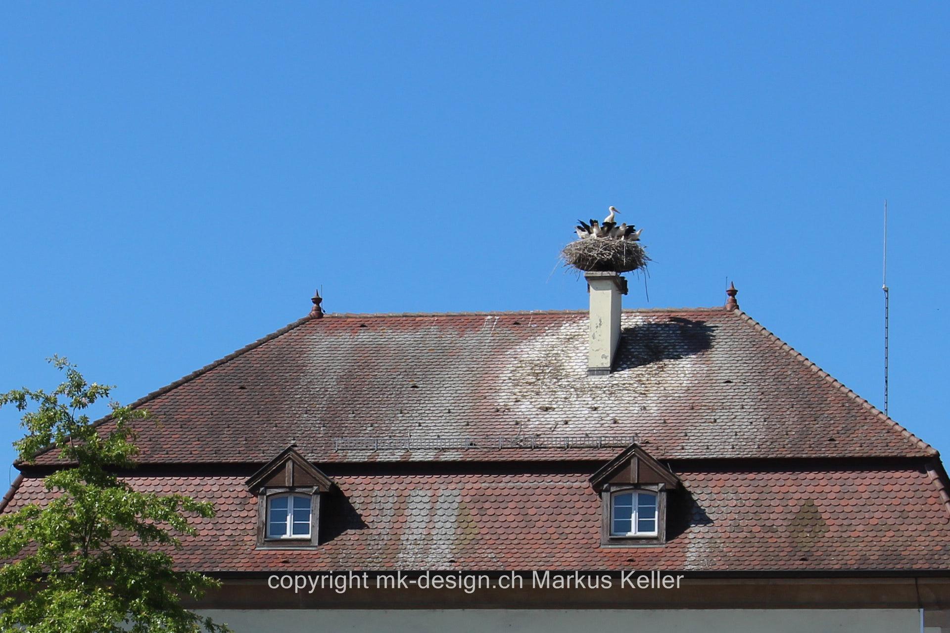 Bauwerk   Haus   Tier   Vogel   Storch