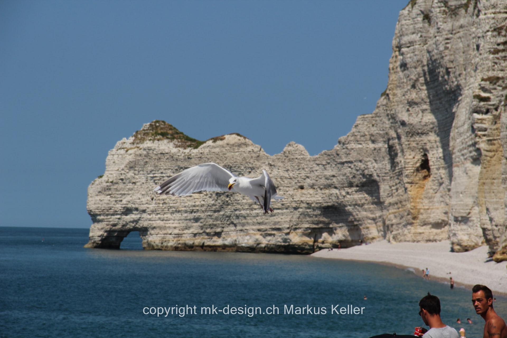 Meer   Strand   Cliff   Tier   Vogel   Möve