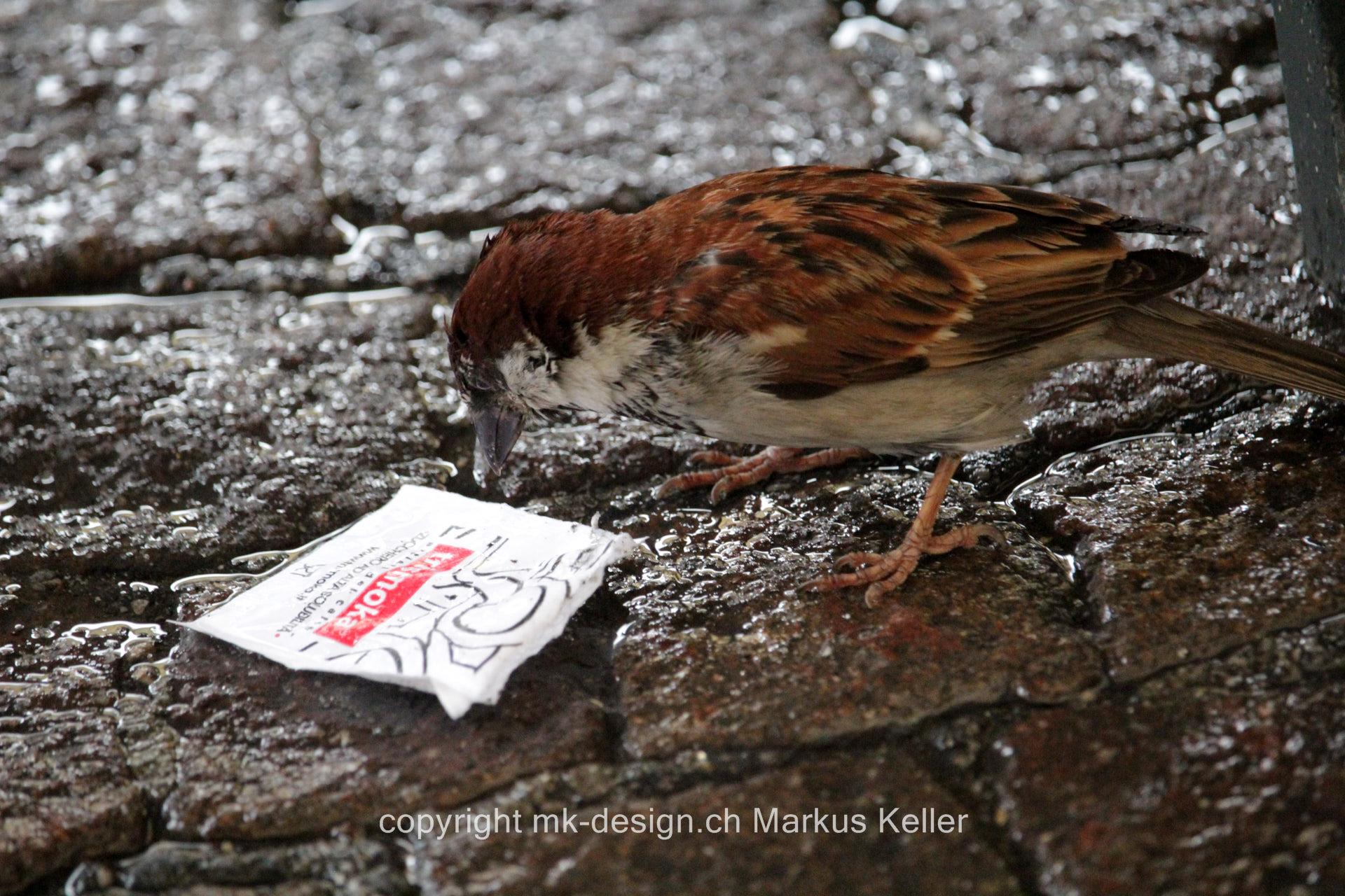 Tier   Vogel   Spatz