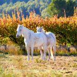 Tier   Pferd