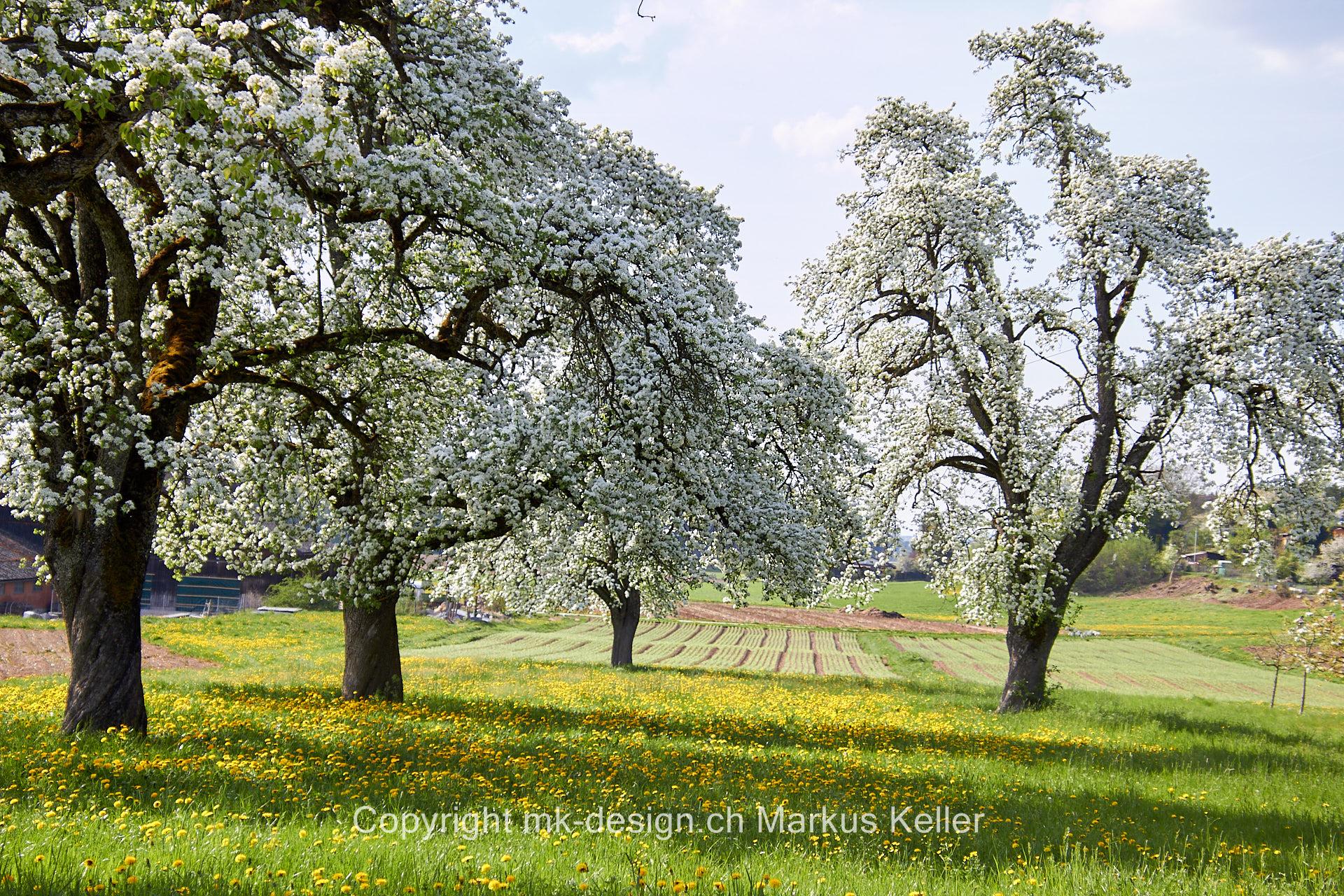Pflanze   Baum   Landschaft