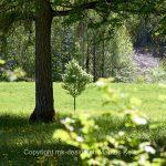 See   Pflanze   Baum