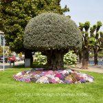 Pflanze   Baum   Blume