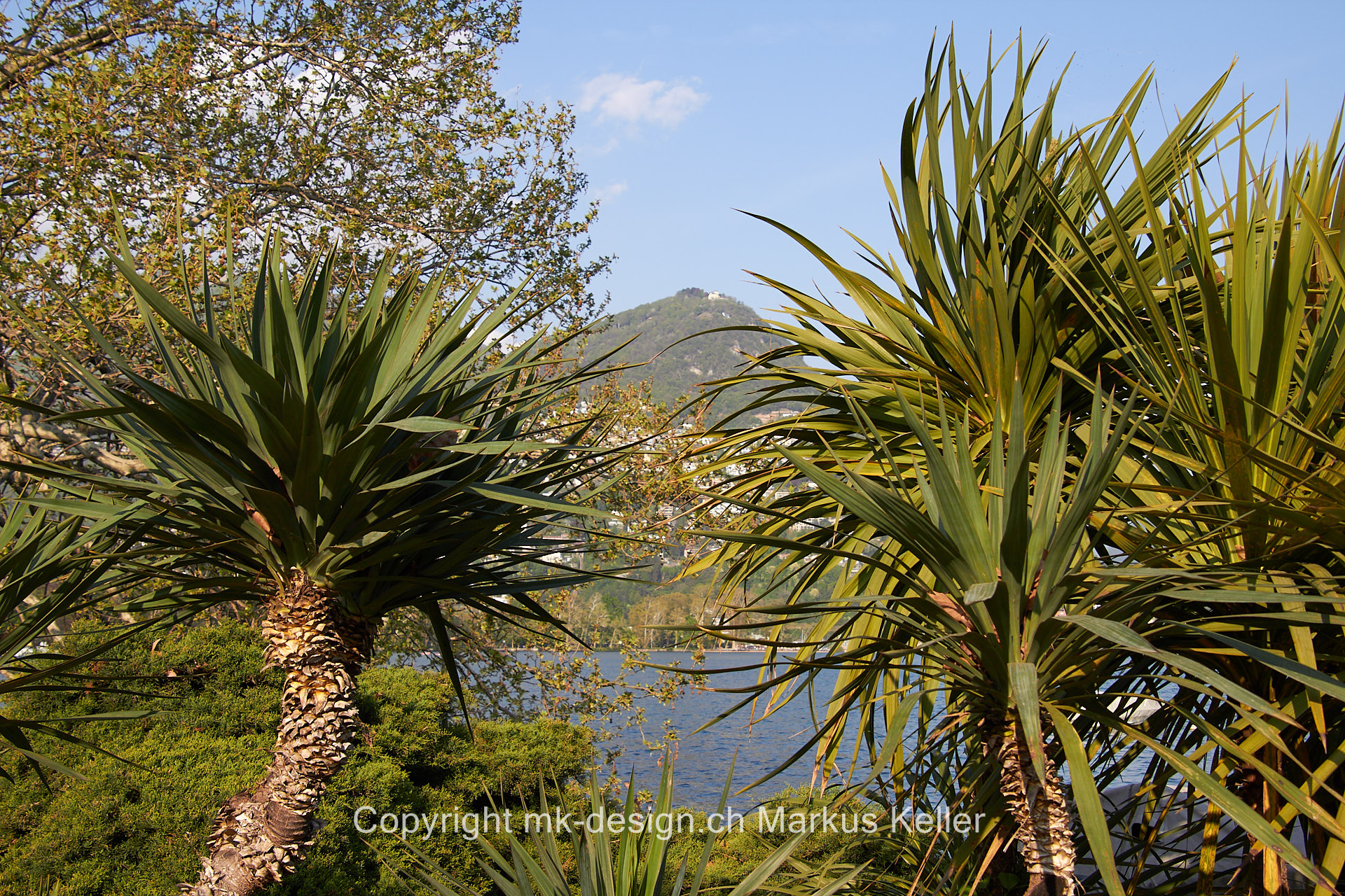 See   Luganersee   Berg   Pflanze   Baum