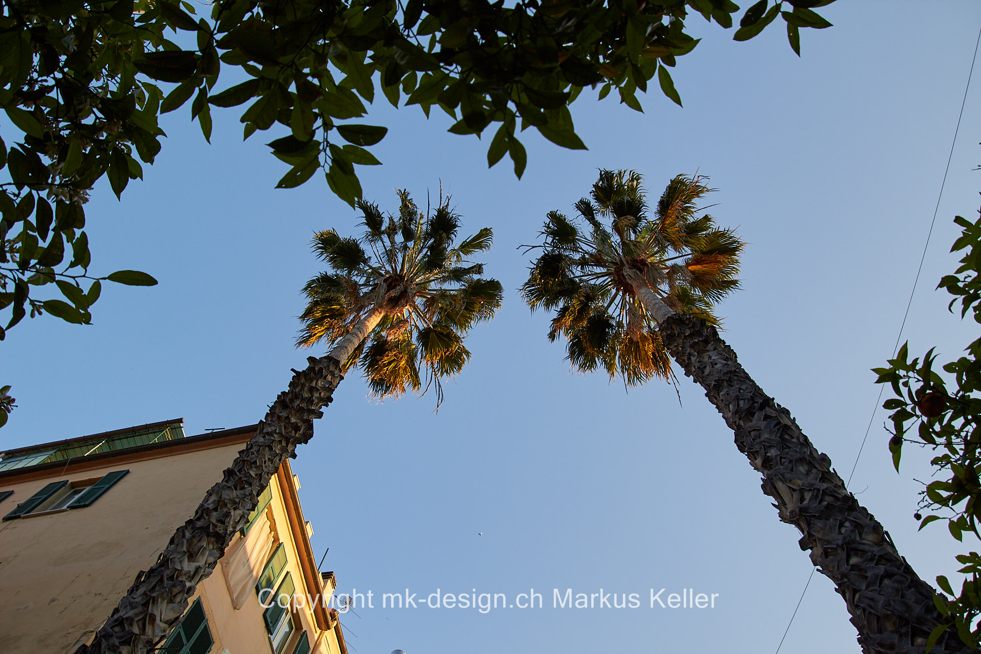 Pflanze   Baum