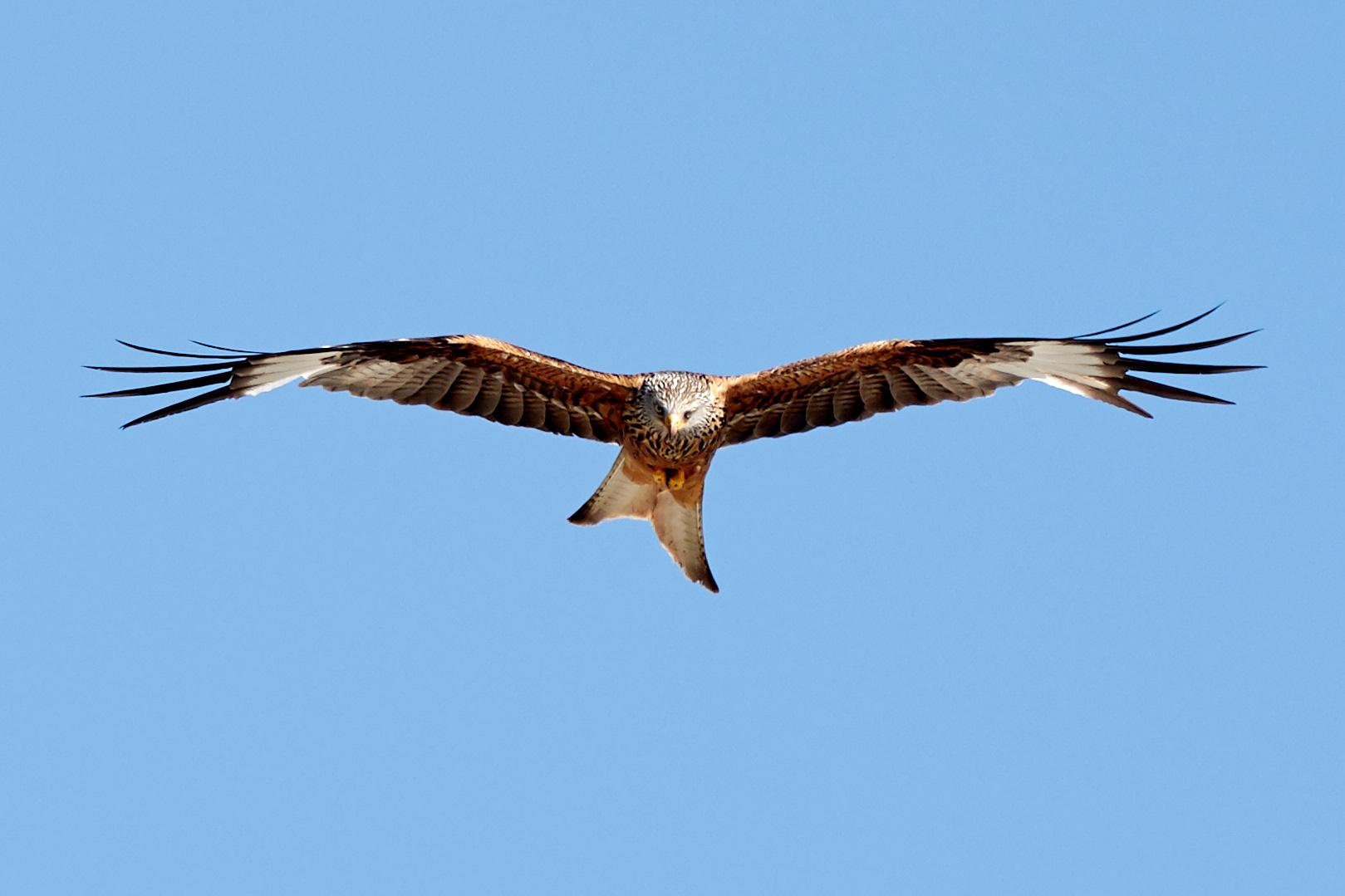 Tier   Vogel   Milan