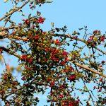 Stilleben   Pflanze   Baum   Ast