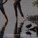 Stilleben   See   Greifensee