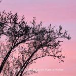 Tier   Vogel   Star   Pflanze   Baum