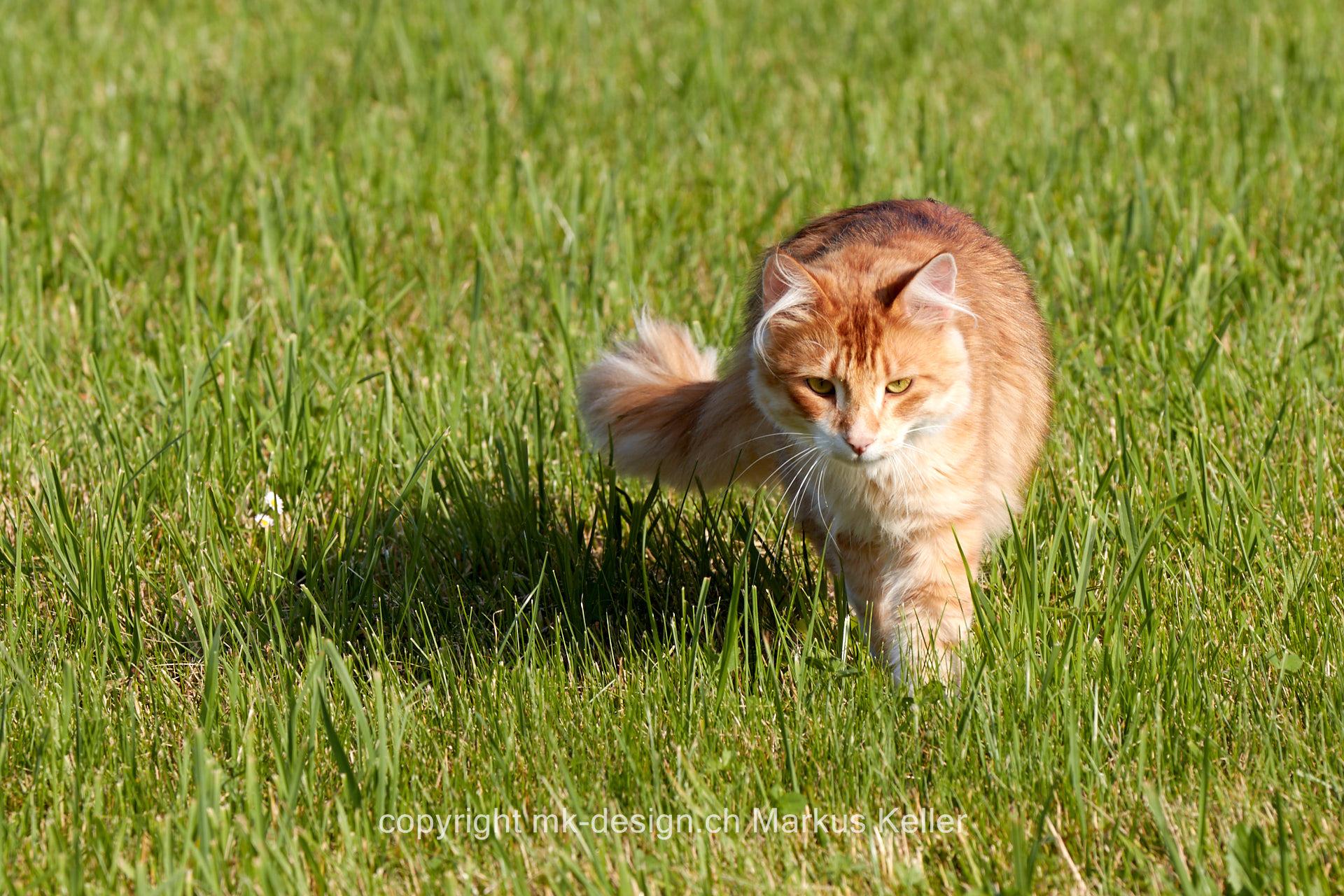 Tier   Katze