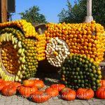 Pflanze   Kürbis   Auto   Traktor