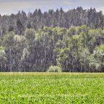 Panorama   Regen