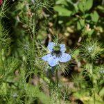 Pflanze   Blume