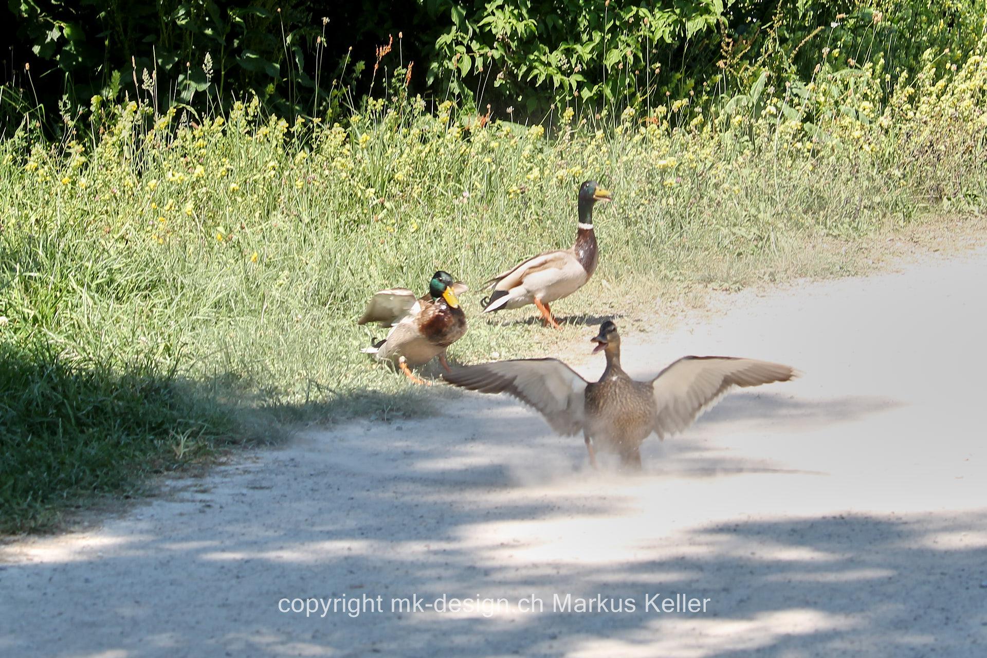 Tier   Vogel   Ente