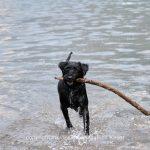 See   Klöntalersee   Tier   Hund