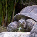 Tier   Schildkröte