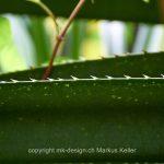 Pflanze   Kaktus