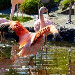 Tier   Vogel   Flamingo   Wolf