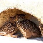 Tier   Vogel   Kuckuk