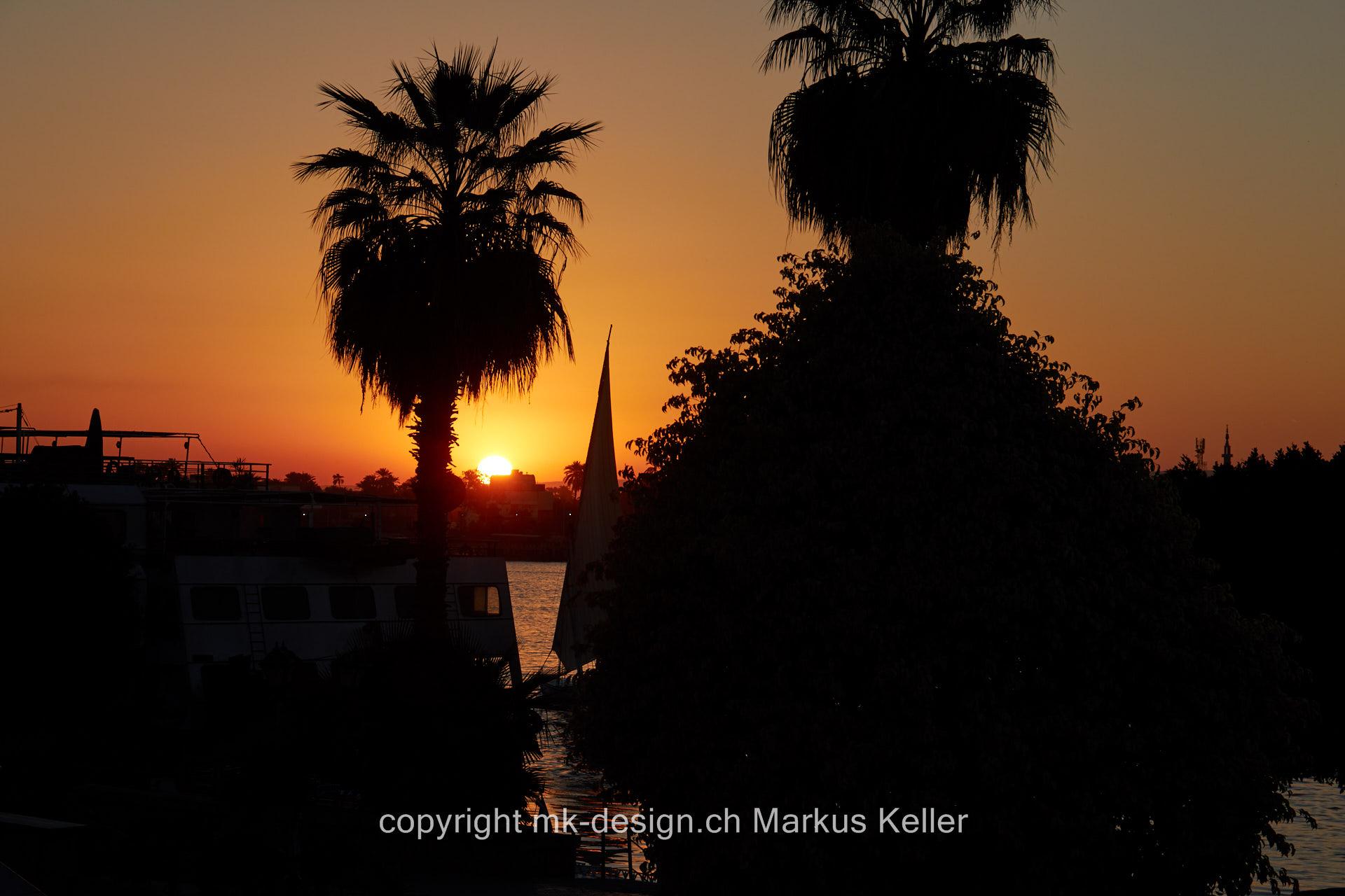 Fluss   Nil   Pflanze   Baum   Palme   Sonne   Sonnenuntergang