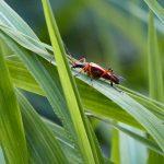 Tier   Insekte   Käfer
