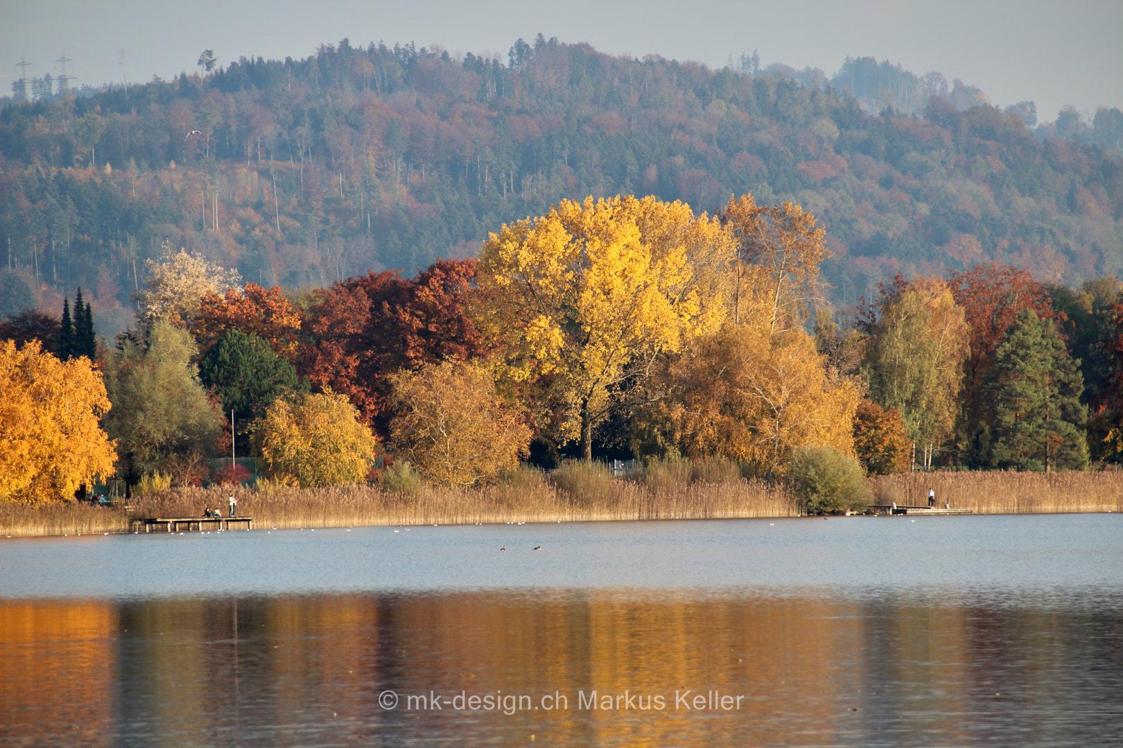 See   Pfäffikersee   Pflanze   Baum   Panorama