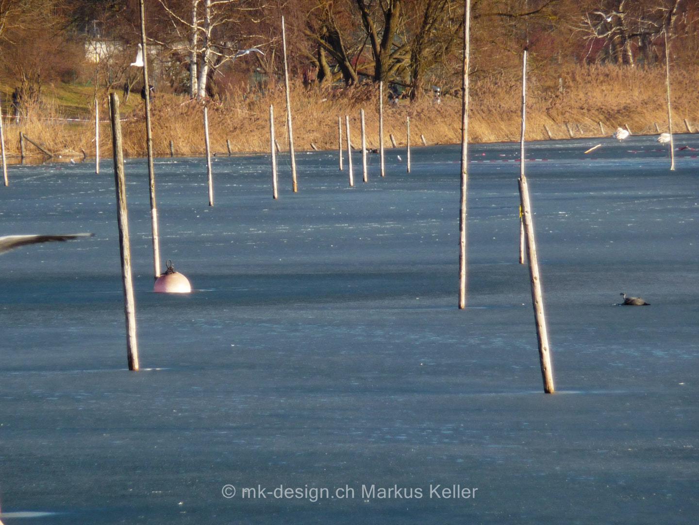 See   Pfäffikersee   Eis